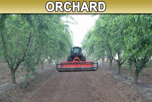 Orchard Picture
