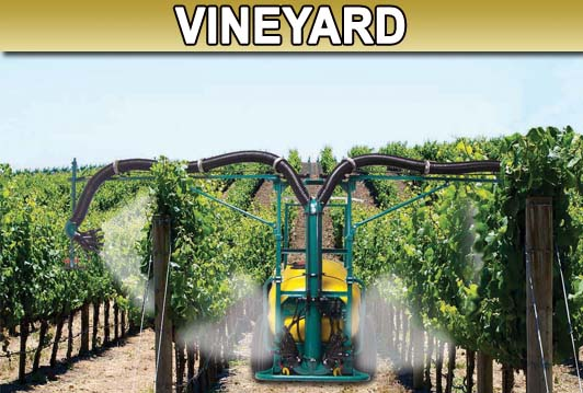 Vineyard Picture